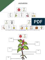 Partes Comestibles de La Planta.pdf