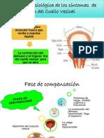 Fisiologia de los sintomas del Cuello vesical