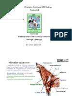 002-MbToracico Miologia y Artrol Eq y Rum