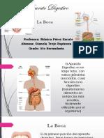 Trabajo Anatomía (1)