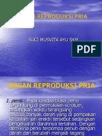 3. Organ Reproduksi Laki2
