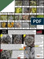 lichenposter fr tprint