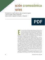Especiacion cromosómicas en primates