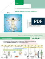 Biología 3º Eso La Organización Del Cuerpo Humano (1)