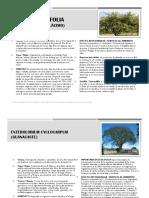 Fichas de vegetación Río Choluteca