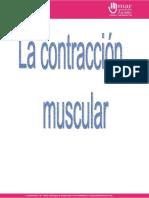 Proceso de Contracion Muscular