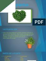Leccion 2 Las Plantas