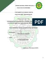 informe para bachiller PDF.docx
