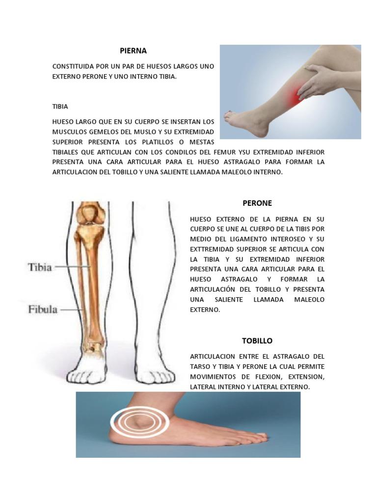 La articulación pierna hueso de la de