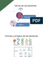 258956810 Caracteristicas de Las Bacterias