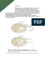 Glutaminolisis (1)