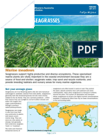 Fact Sheet Seagrasses