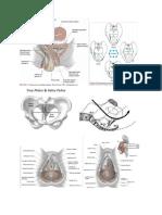 anatomi jalan lahir.docx