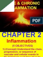 Inflammation Process