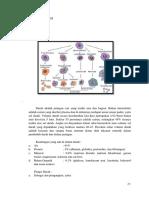2. Anatomi Fisiologi and Laporan Pendahuluan DHF
