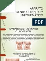 Aparato Genitourinario y Linfomatic