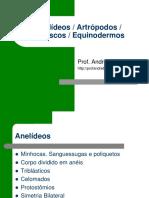 19073409 Anelideos Moluscos Artrpodos Equinodermos