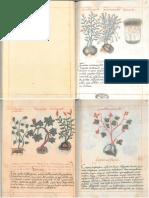 CÓDICE DE LA CRUZ-BADIANO (Libellus de Medicinalibus Indorum Herbis)