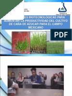 BIOTECNOLOGÍA DE CAÑA DE AZÚCAR-EXTENSO.pdf