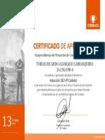 Certificado Induccion SSO Codelco VP