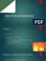 Diapositivas Biofilm Oral
