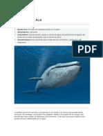 ballena azul 7.docx
