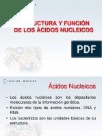 Estructura c3a1cidos Nucleicos (1)