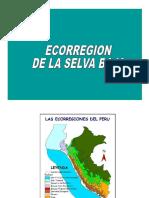 Clase 1 - Selva Baja y Sabana de Palmeras