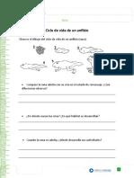 ciclo vida anfibio.doc