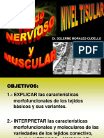 Tema Tejido Nervioso y Muscular