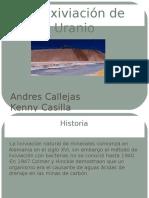 Biolixiviación de Uranio final.pdf