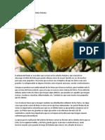 Aclareo de Frutas en Los Árboles Frutales