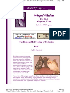 The Responsible Breeding of Cockatiels | Birds | Egg