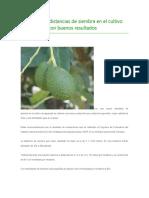 INIAP Evalúa Distancias de Siembra en El Cultivo de Aguacate Con Buenos Resultados