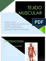 4 T.muscular