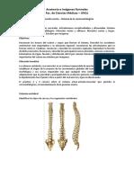 Practico 2 - Cervicocefalogiria