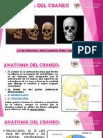 Clase Anatomia Del Craneo Final