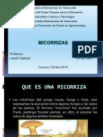 Presentación de Micorrizas.pptx