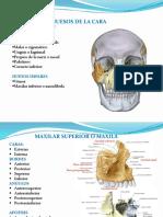 Huesos de La Cara Parte 1