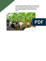La Región San Martín Quiere Convertirse en Líder en La Producción de Plátano y Con Ese Fin El Gobierno Regional Ejecuta Un Proyecto Con El Fin de Mejorar El Nivel de Producción de Este Cultivo y Promover La Transformación Tec