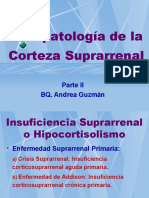 Corteza Suprarrenal 02 Hipocortisolismo 1193332926504999 5 Ppt Share)