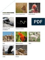 animales exoticos.docx