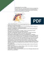 meningitis 3B.doc