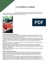 Portola - Căpșun Cu Fructificare Contin..