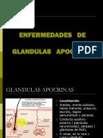 ENFERMEDADES   DE GLANDULAS APOCRINAS.ppt