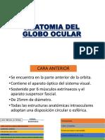 ANATOMIA DEL GLOBO OCULAR.pptx