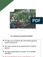 04-Nutricion-Mineral-Reguladores-Del-Crecimiento-Y-Riego-Para-Palto-02.pdf
