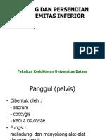 (Inferior) Tulang & Persendian Extremitas