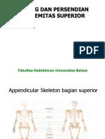 (Superior) Tulang & Persendian Extremitas