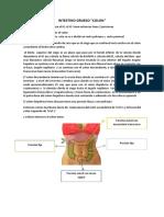 Anatomia Colon